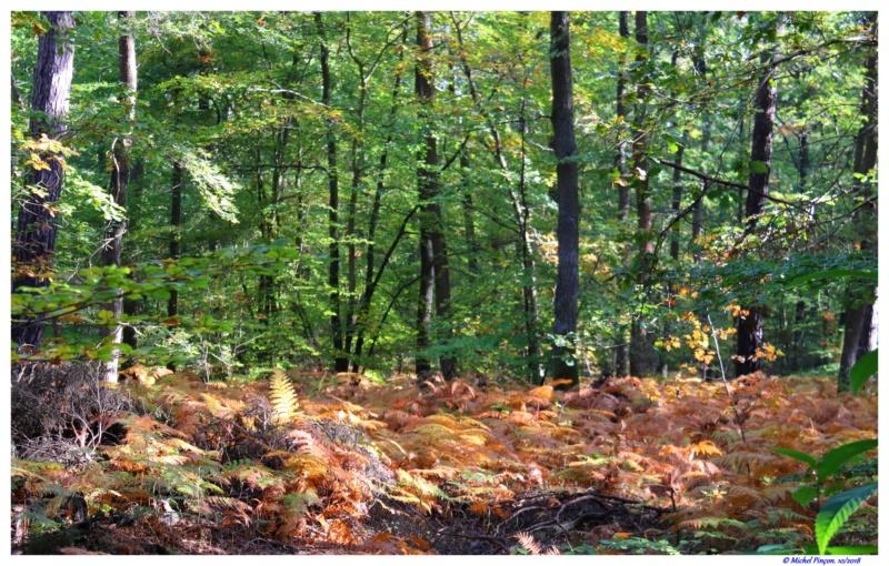 [fil ouvert] la forêt dans tous ses états - Page 19 Dsc01489