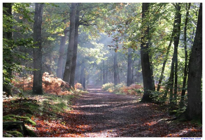 [fil ouvert] la forêt dans tous ses états - Page 19 Dsc01492