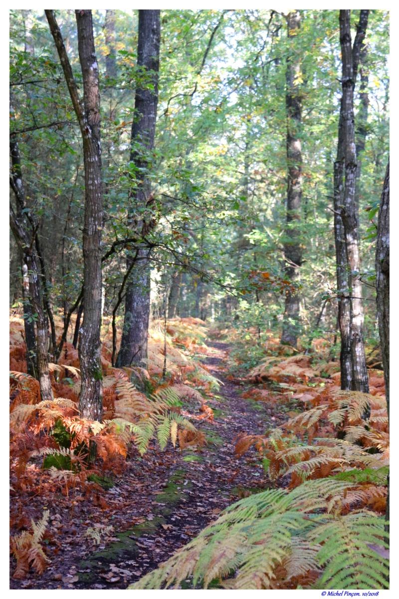 [fil ouvert] la forêt dans tous ses états - Page 19 Dsc01495