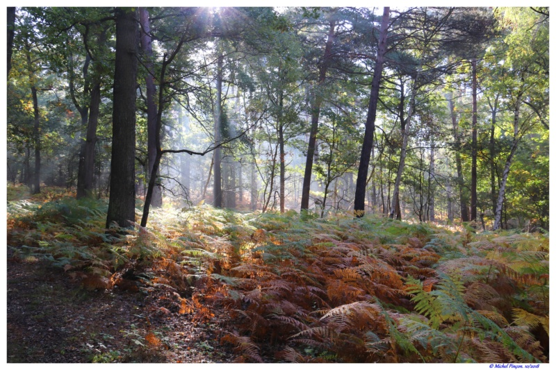 [fil ouvert] la forêt dans tous ses états - Page 19 Dsc01496