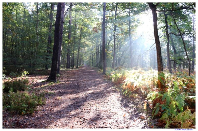 [fil ouvert] la forêt dans tous ses états - Page 19 Dsc01497