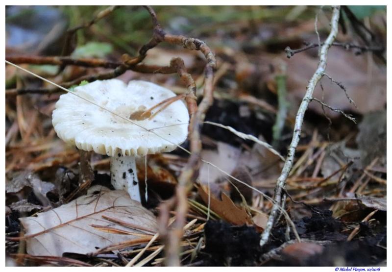 [fil ouvert] les champignons - Page 9 Dsc01506