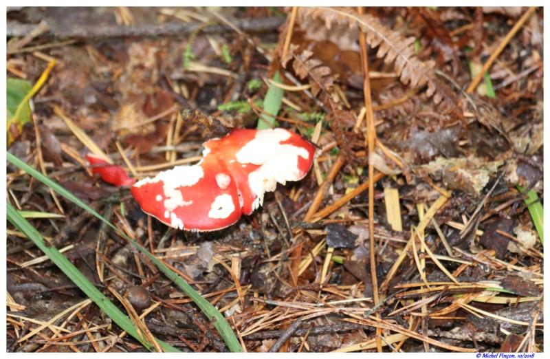 [fil ouvert] les champignons - Page 9 Dsc01508
