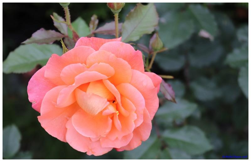 [Fil Ouvert] Fleurs - Page 22 Dsc01510