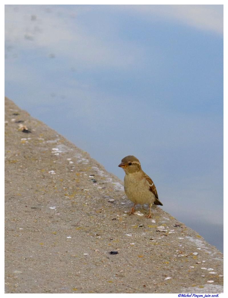 [Ouvert] FIL - Oiseaux. - Page 16 Dsc01569