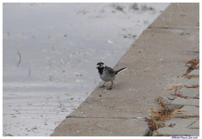 [Ouvert] FIL - Oiseaux. - Page 16 Dsc01570