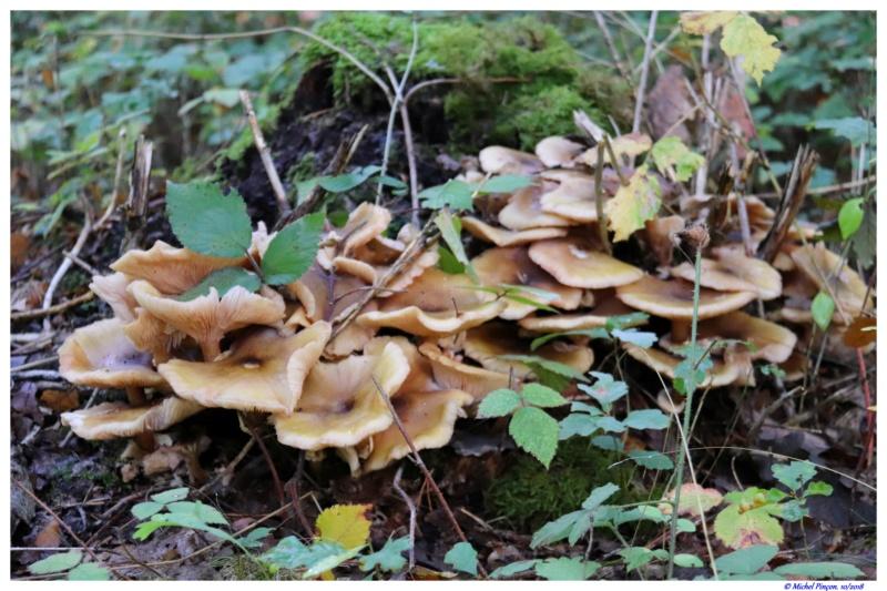 [fil ouvert] les champignons - Page 9 Dsc01600