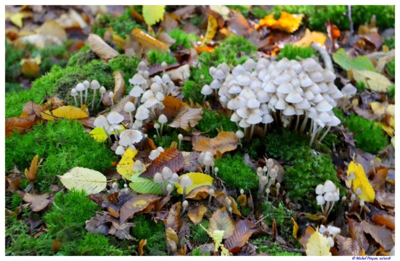 [fil ouvert] les champignons - Page 9 Dsc01602
