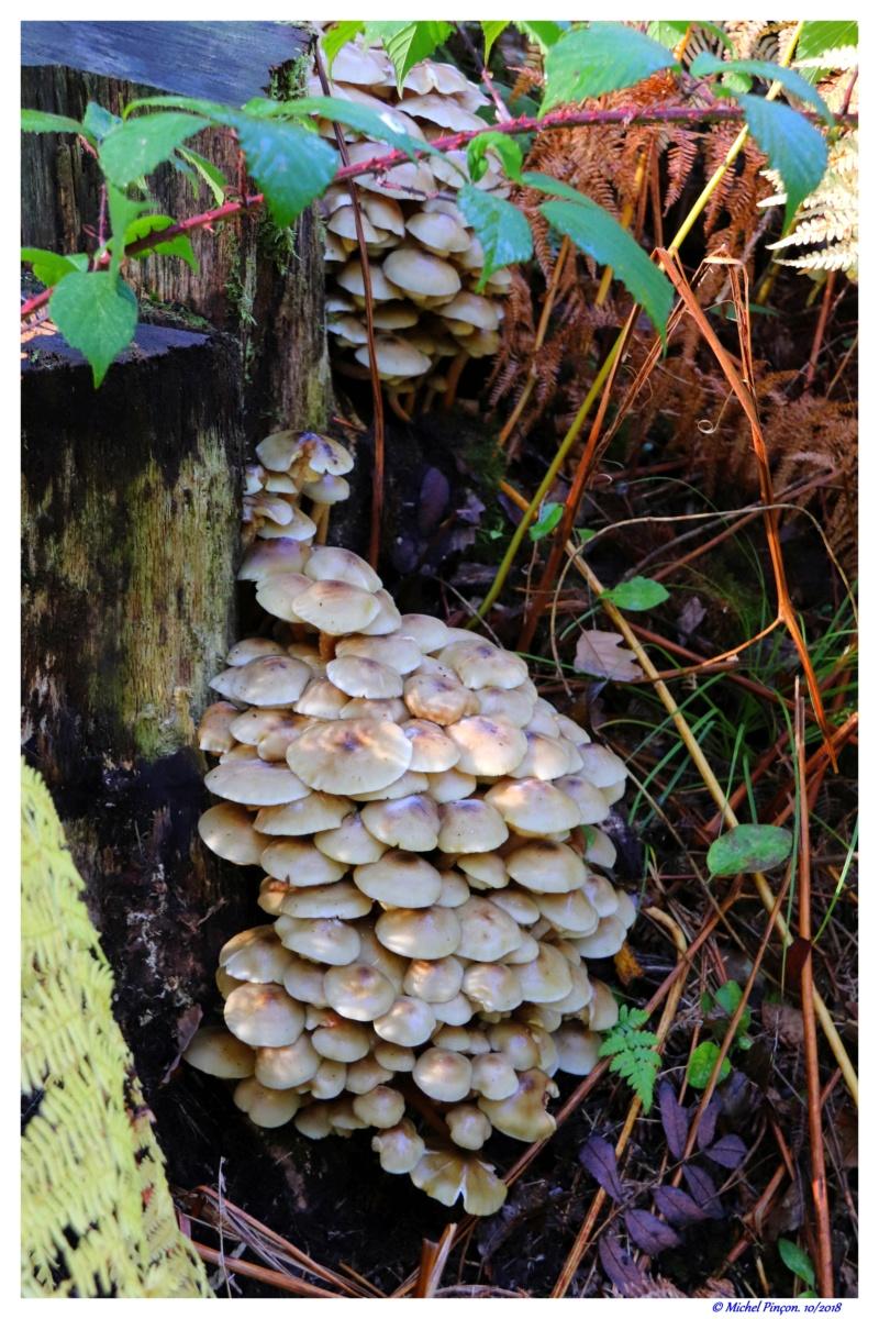 [fil ouvert] les champignons - Page 9 Dsc01603
