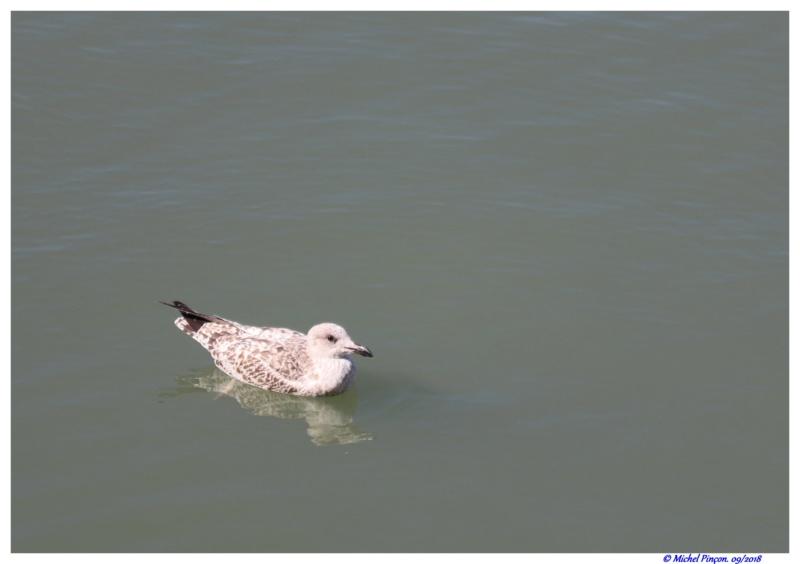 [Ouvert] FIL - Oiseaux. - Page 18 Dsc01606