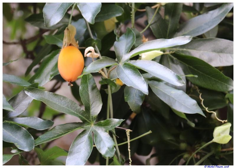 [Fil ouvert] Fruit sur l'arbre - Page 10 Dsc01621