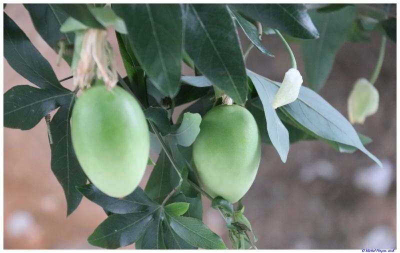 [Fil ouvert] Fruit sur l'arbre - Page 10 Dsc01622