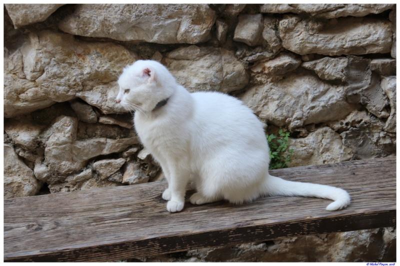 [fil ouvert] Les chats  - Page 7 Dsc01636