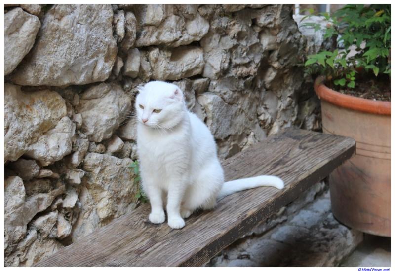 [fil ouvert] Les chats  - Page 7 Dsc01637