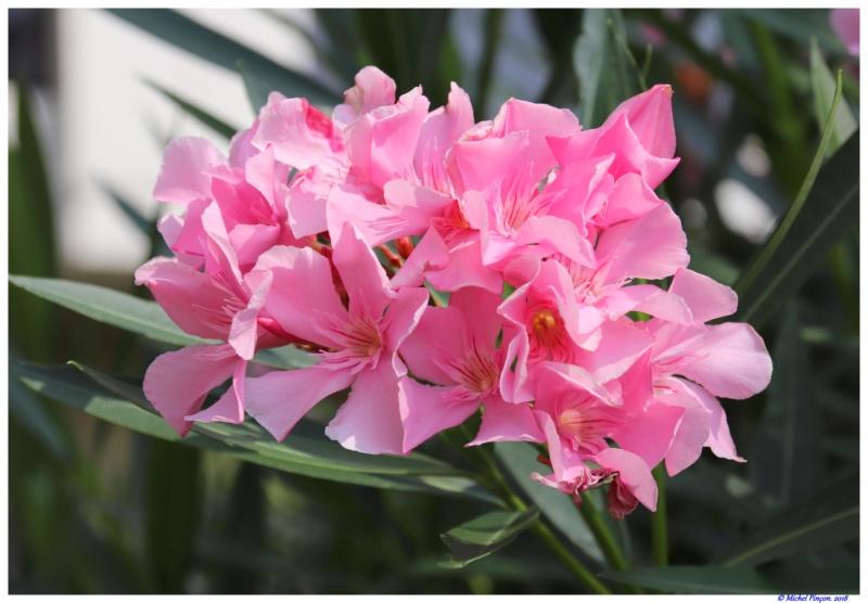 [Fil Ouvert] Fleurs - Page 24 Dsc01643