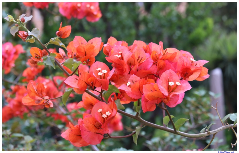 [Fil Ouvert] Fleurs - Page 24 Dsc01645