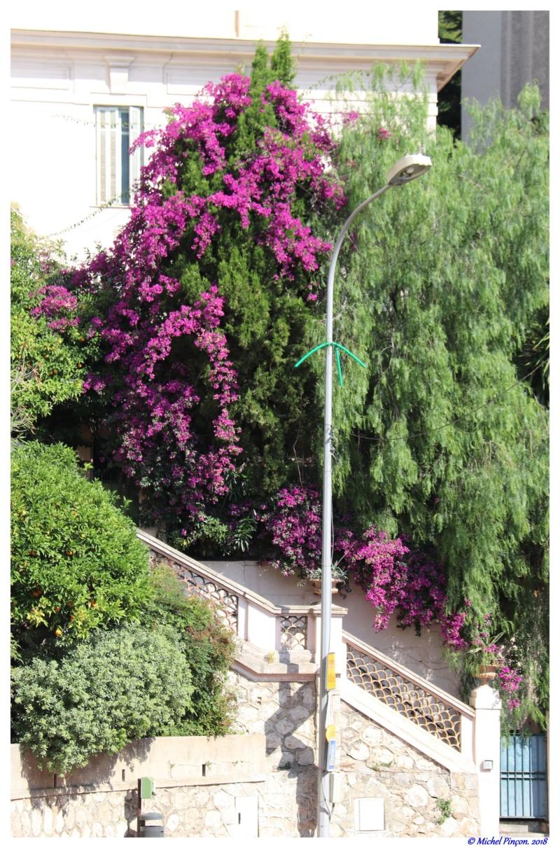 [Fil Ouvert] Fleurs - Page 24 Dsc01673