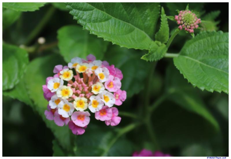 [Fil Ouvert] Fleurs - Page 24 Dsc01674