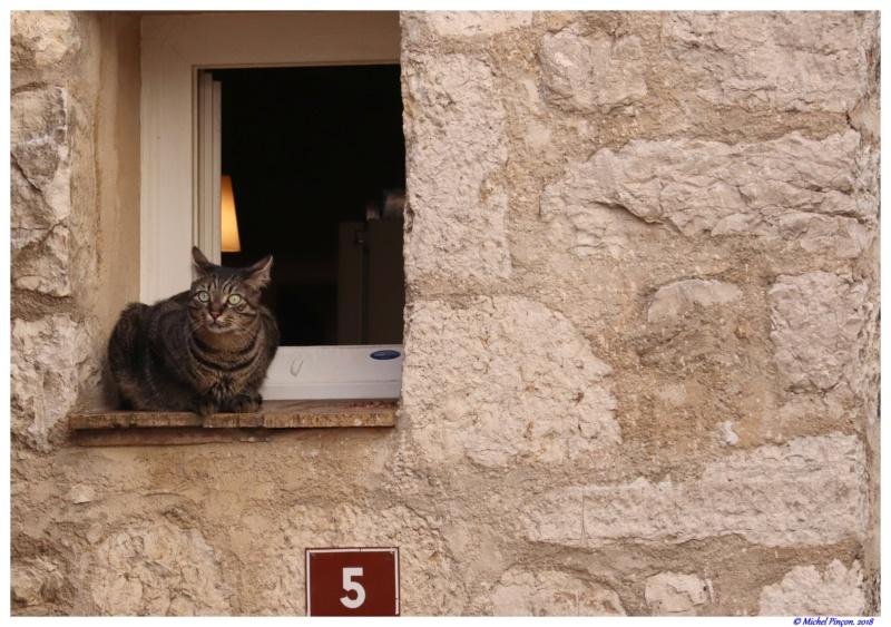 [fil ouvert] Les chats  - Page 7 Dsc01676