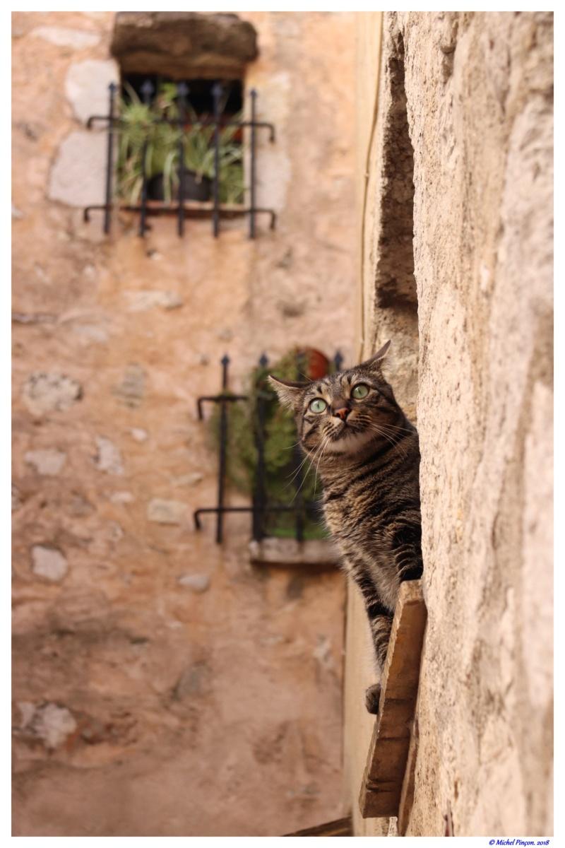[fil ouvert] Les chats  - Page 7 Dsc01677