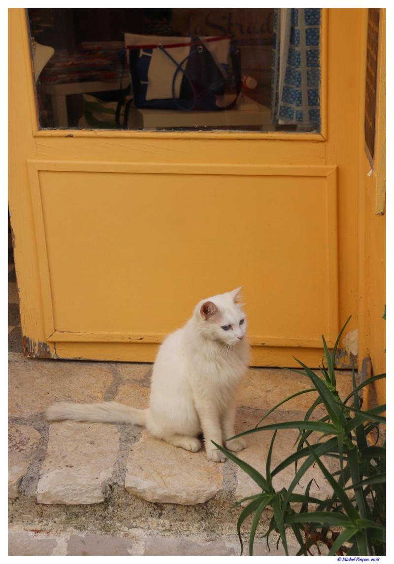 [fil ouvert] Les chats  - Page 7 Dsc01681