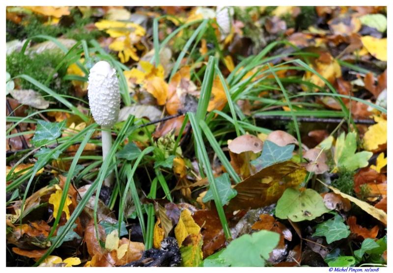 [fil ouvert] les champignons - Page 9 Dsc01710
