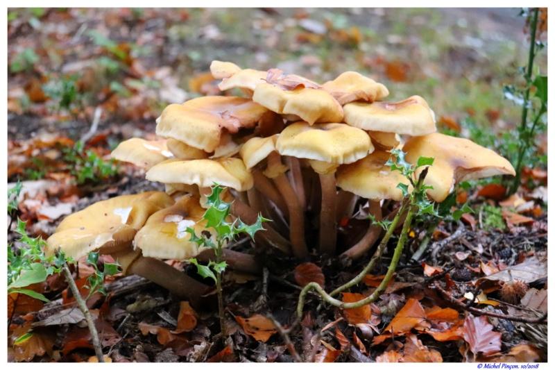 [fil ouvert] les champignons - Page 10 Dsc01719