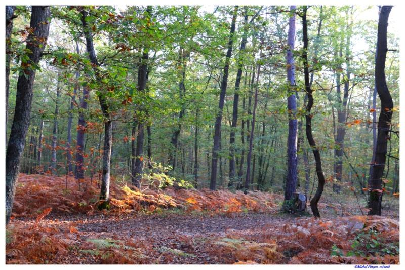 [fil ouvert] la forêt dans tous ses états - Page 21 Dsc01764