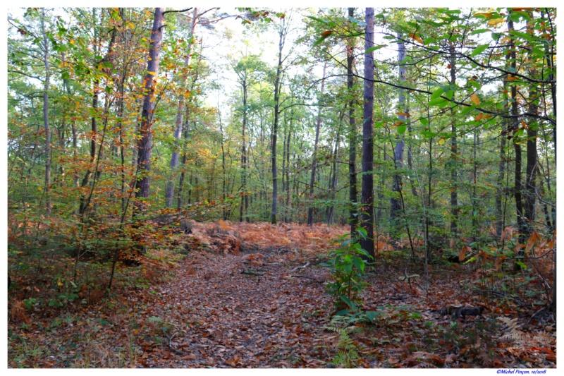 [fil ouvert] la forêt dans tous ses états - Page 21 Dsc01766