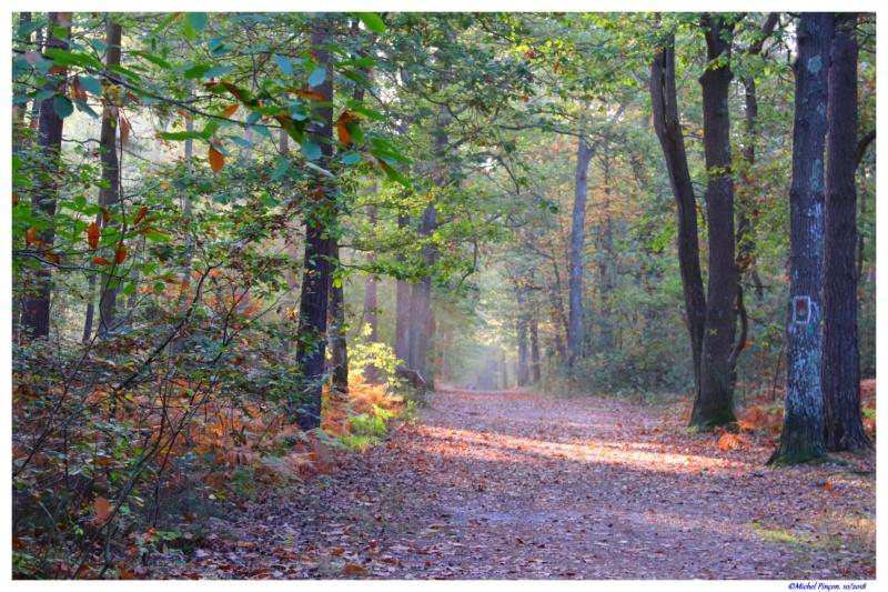 [fil ouvert] la forêt dans tous ses états - Page 21 Dsc01767