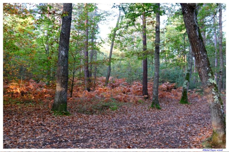 [fil ouvert] la forêt dans tous ses états - Page 21 Dsc01768