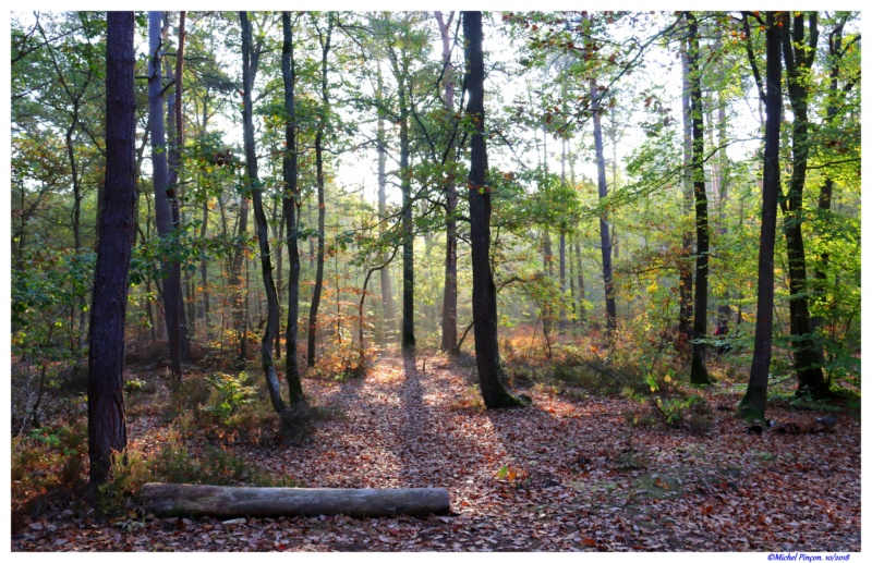 [fil ouvert] la forêt dans tous ses états - Page 21 Dsc01769