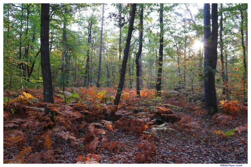 [fil ouvert] la forêt dans tous ses états - Page 21 Dsc01770
