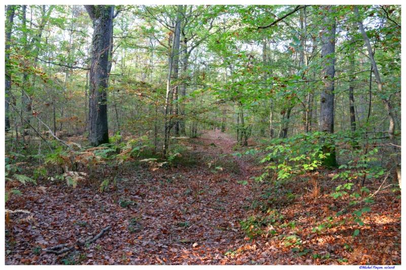 [fil ouvert] la forêt dans tous ses états - Page 21 Dsc01771
