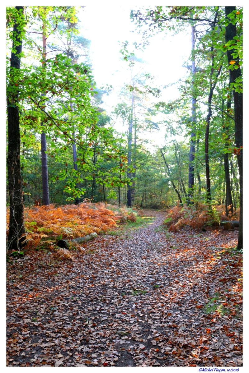 [fil ouvert] la forêt dans tous ses états - Page 21 Dsc01772