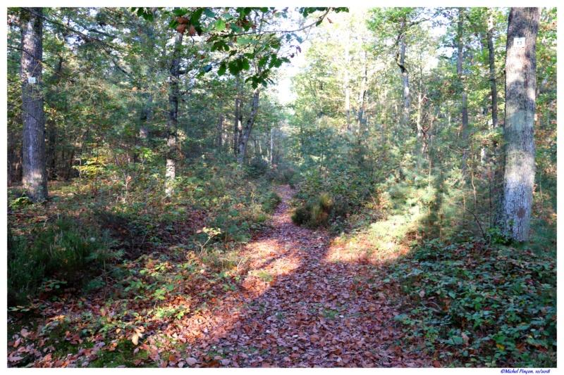 [fil ouvert] la forêt dans tous ses états - Page 21 Dsc01773