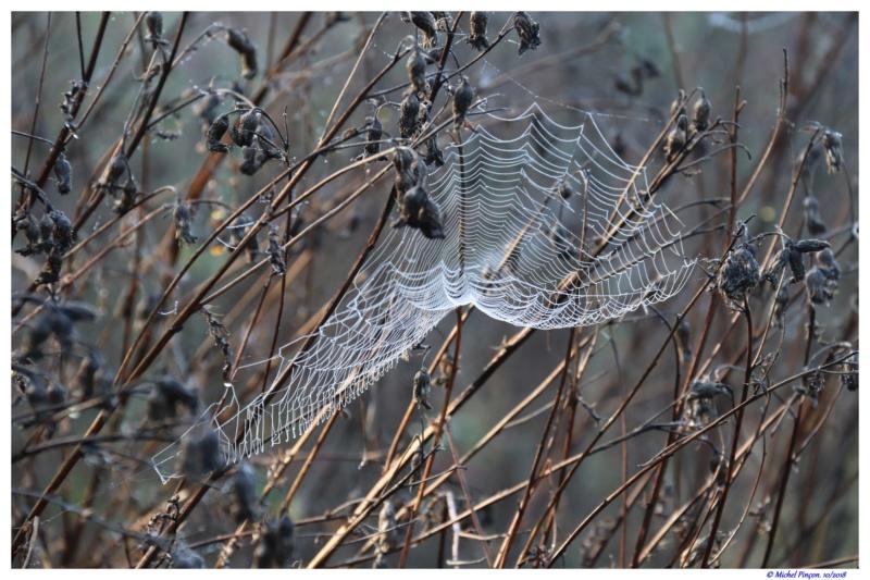 [Fil ouvert] Toile d'araignée Dsc01774