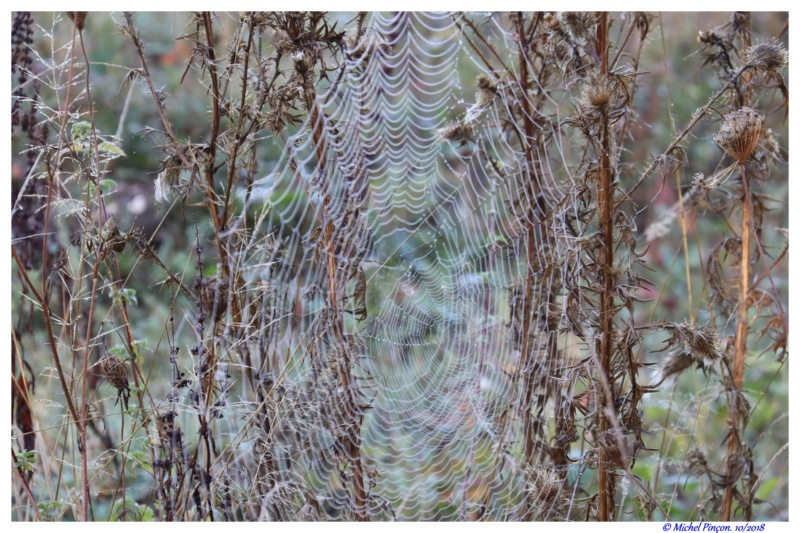 [Fil ouvert] Toile d'araignée Dsc01775