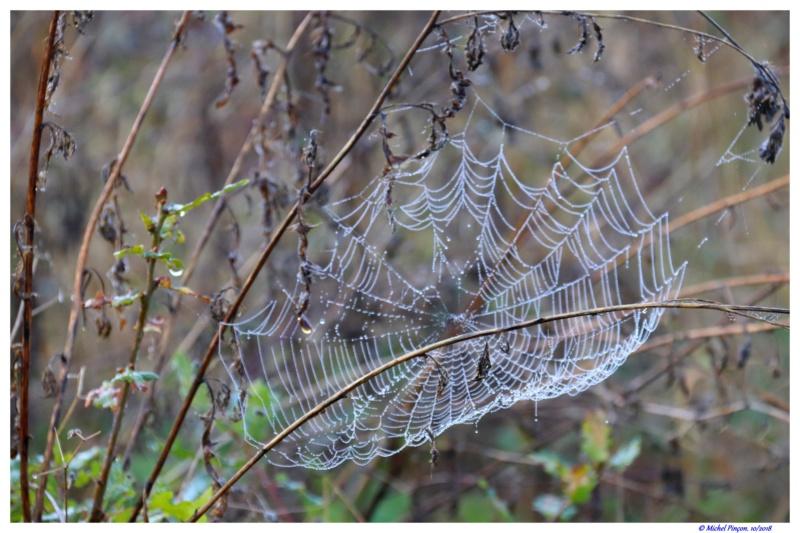 [Fil ouvert] Toile d'araignée Dsc01776