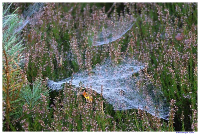 [Fil ouvert] Toile d'araignée Dsc01777