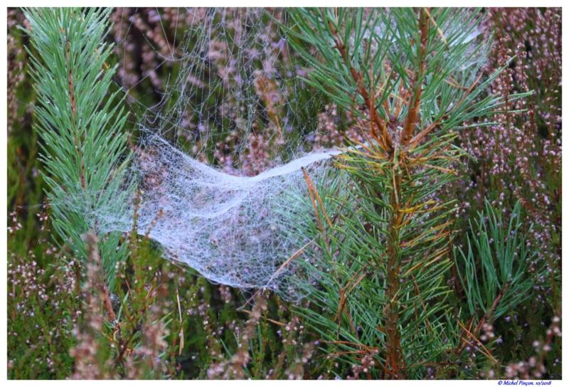 [Fil ouvert] Toile d'araignée Dsc01778