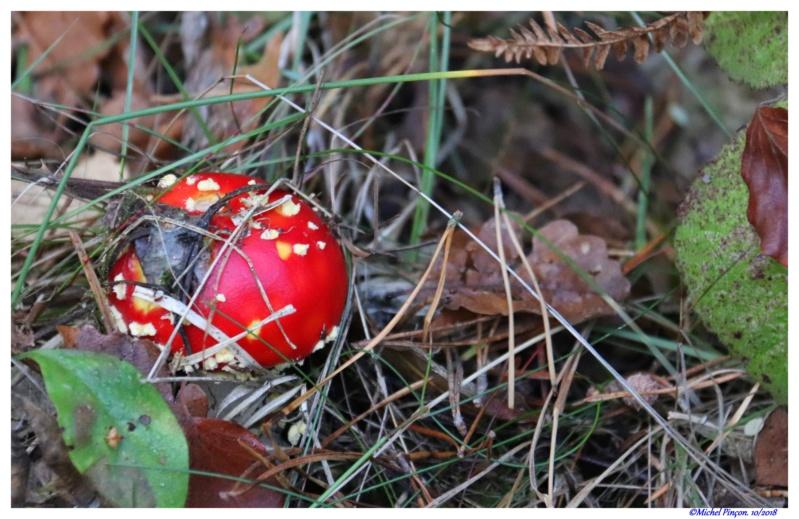 [fil ouvert] les champignons - Page 10 Dsc01780