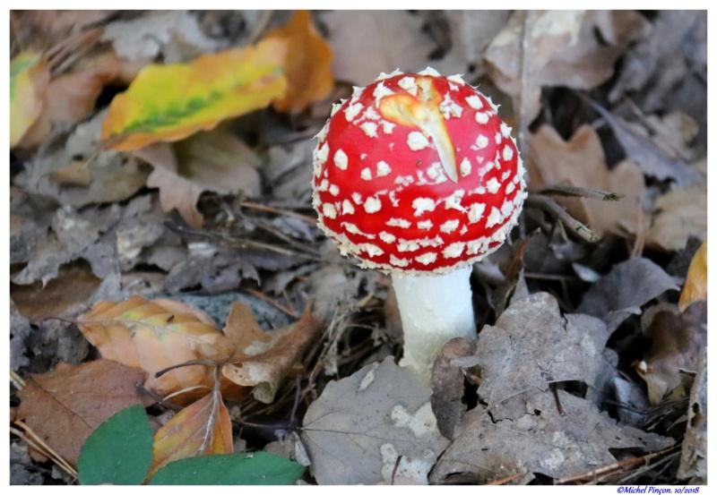 [fil ouvert] les champignons - Page 10 Dsc01789
