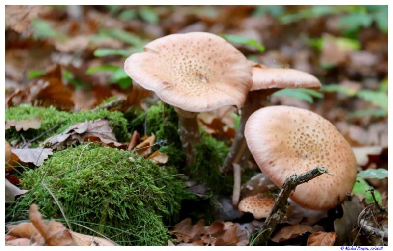 [fil ouvert] les champignons - Page 10 Dsc01841