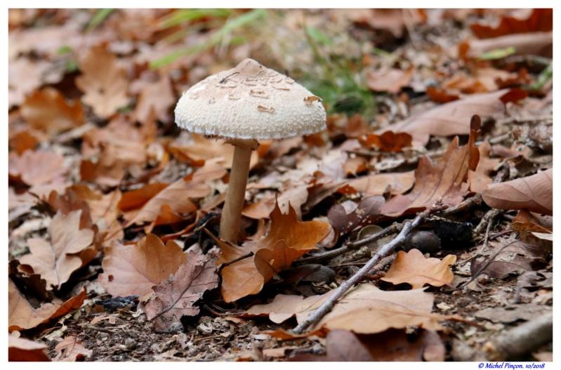 [fil ouvert] les champignons - Page 10 Dsc01843
