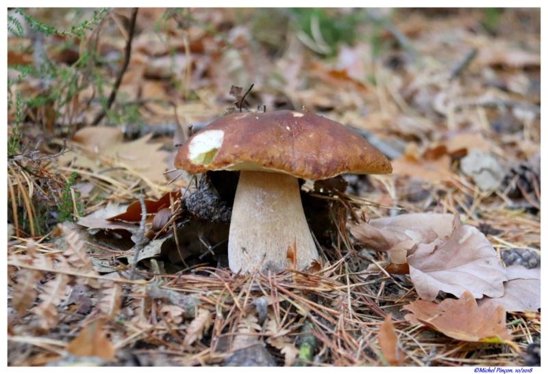 [fil ouvert] les champignons - Page 10 Dsc01844
