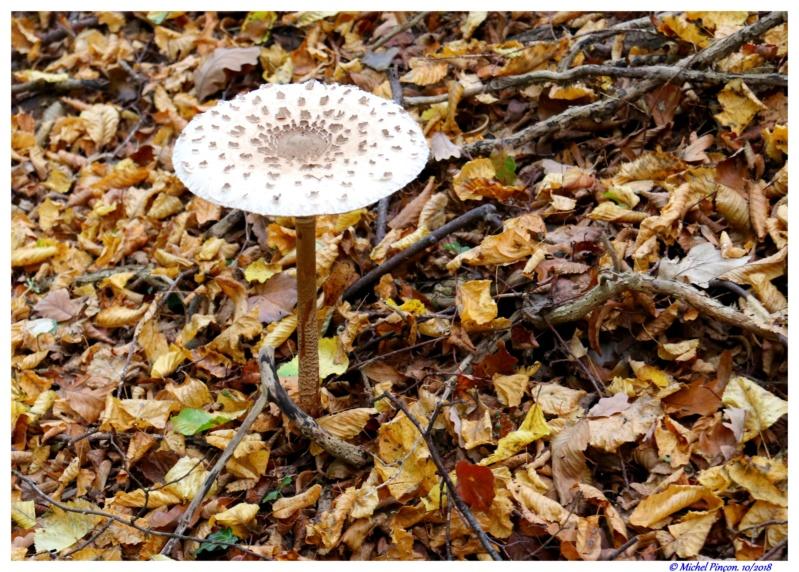 [fil ouvert] les champignons - Page 10 Dsc01845