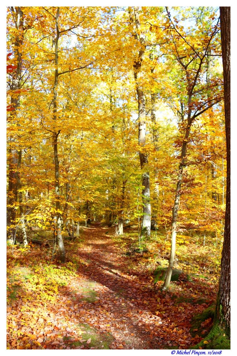 [fil ouvert] la forêt dans tous ses états - Page 21 Dsc01902
