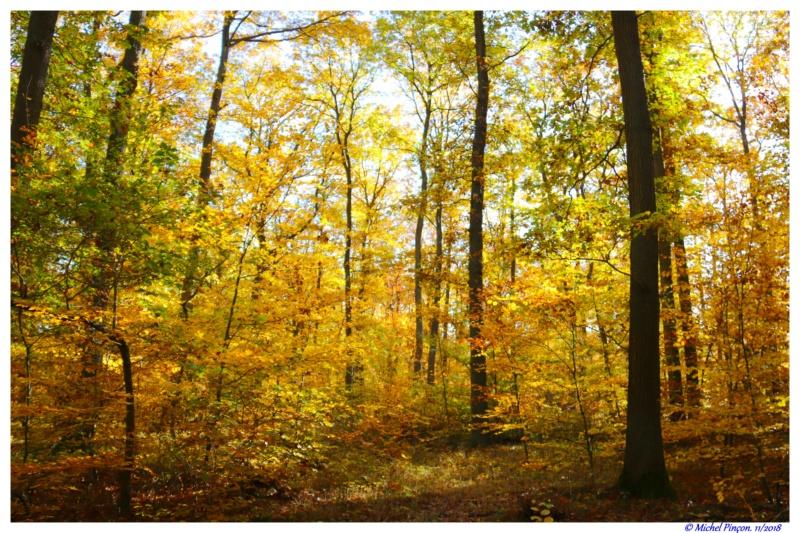 [fil ouvert] la forêt dans tous ses états - Page 21 Dsc01905