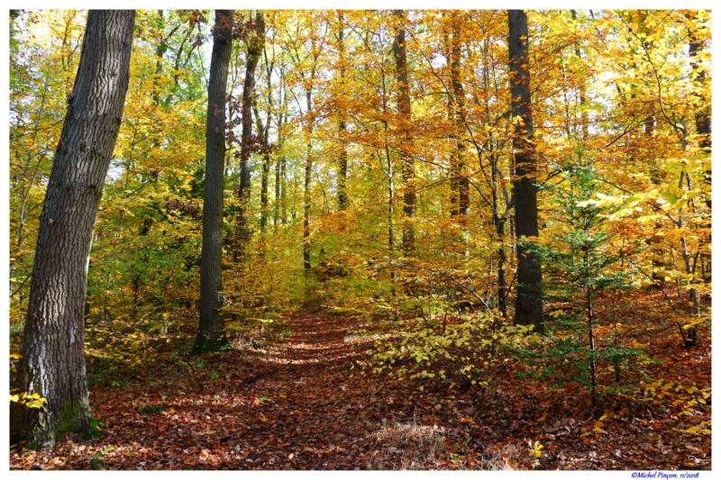 [fil ouvert] la forêt dans tous ses états - Page 21 Dsc01907